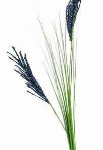 Floarea celebritatii, gloriei si faimei - 95 cm