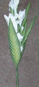 Floarea alba a puritatii si norocului de urmasi